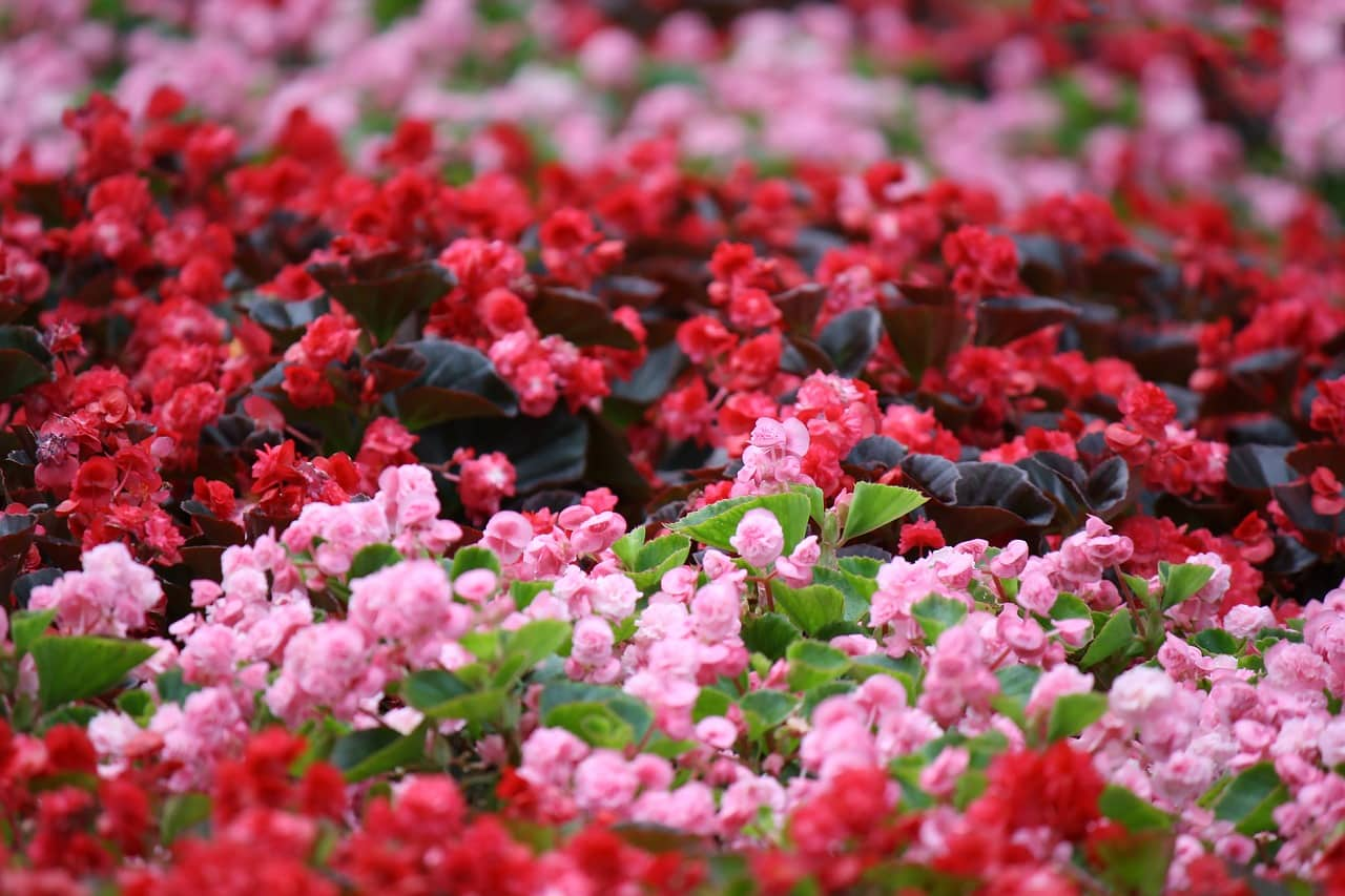 Landscaping your spring flower beds scenicscape landscaping your spring flower beds mightylinksfo