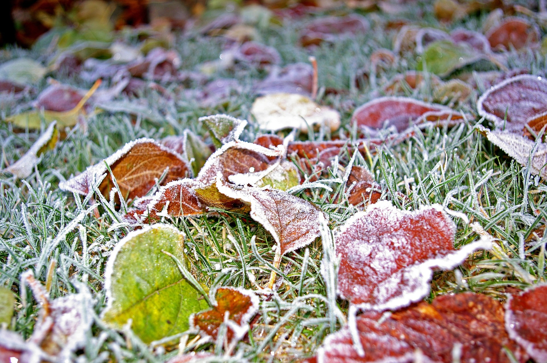 Winter Lawn Care & Maintenance 2017 - Featured Image