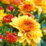 Fall Flower Beds and Perennial Planting